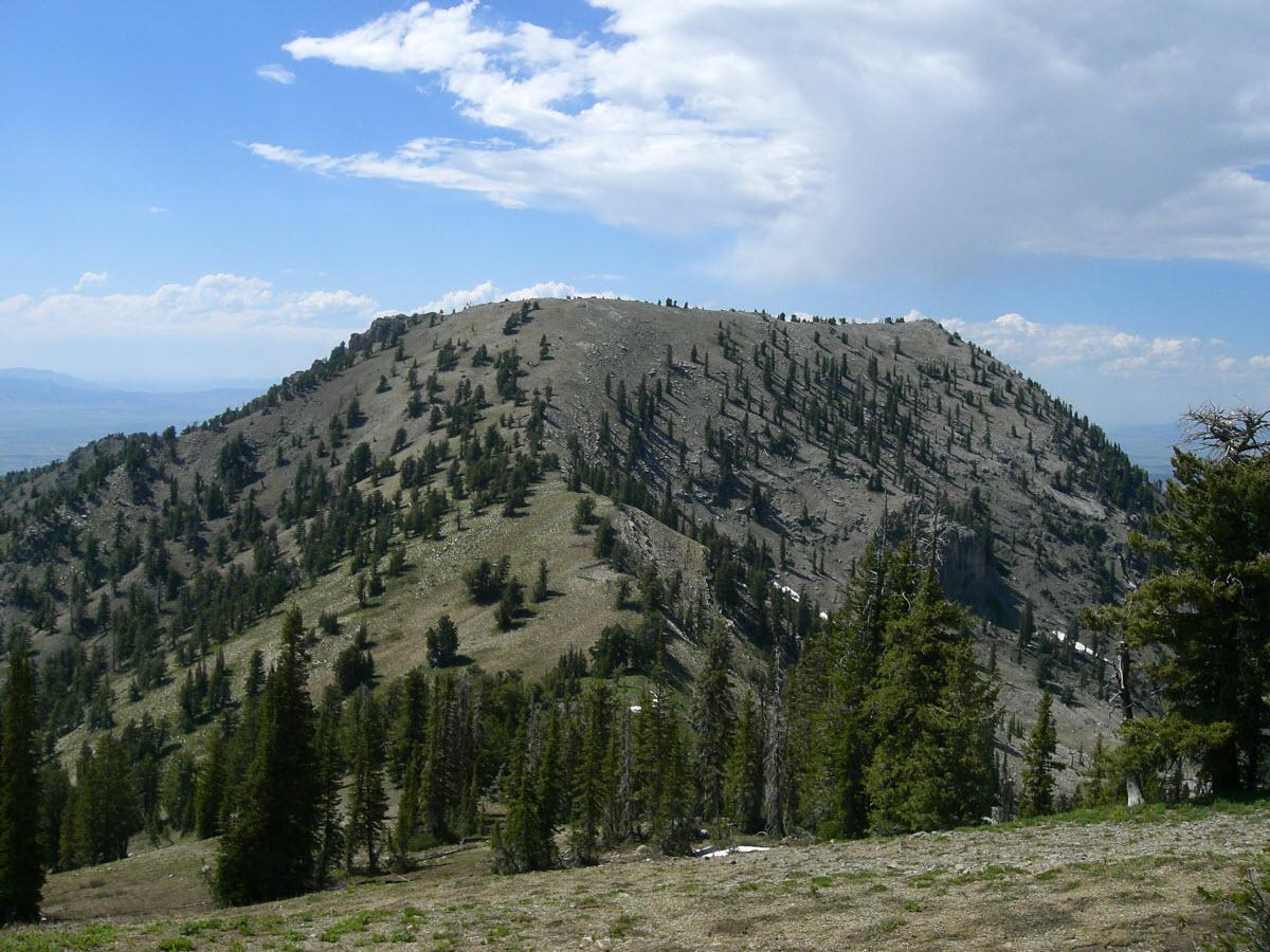 North Creek Meadows