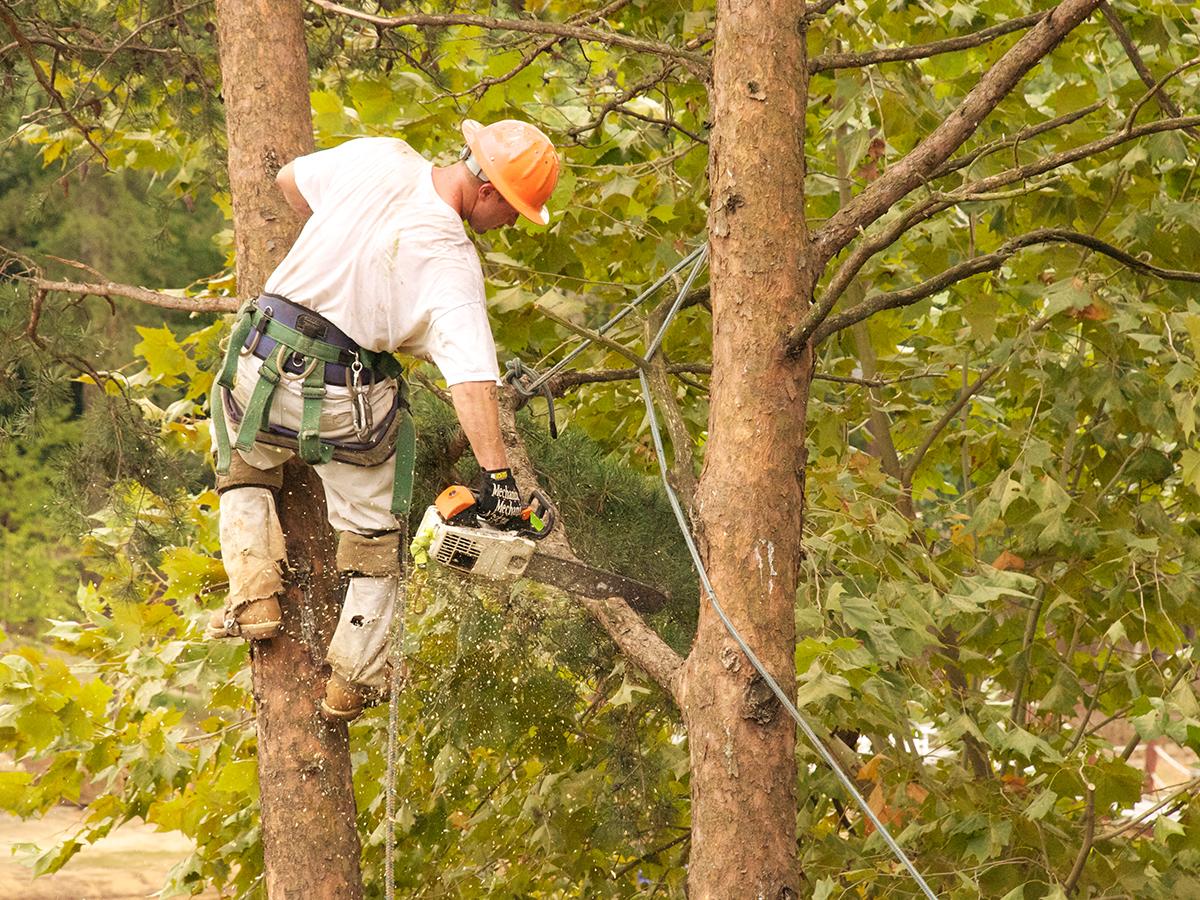 Hidden Oak Tree Care