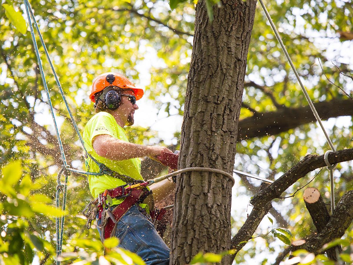 High Climbers Tree Care