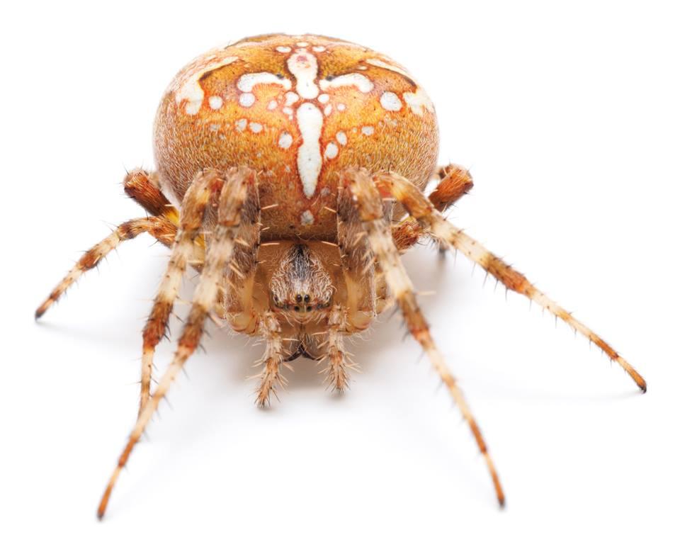 Cedar Ridge Pest Control Cedar Ridge Pest Control Wi 53555