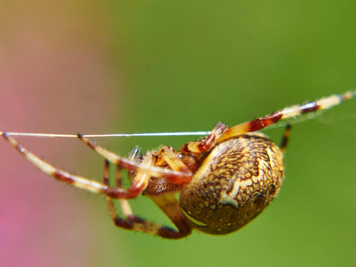 SmartGuard Pest Control / Riverton