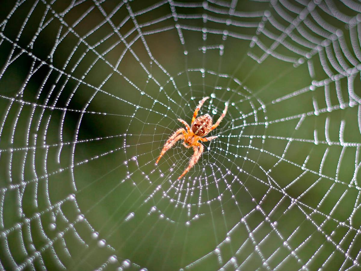 Utah Pest Control