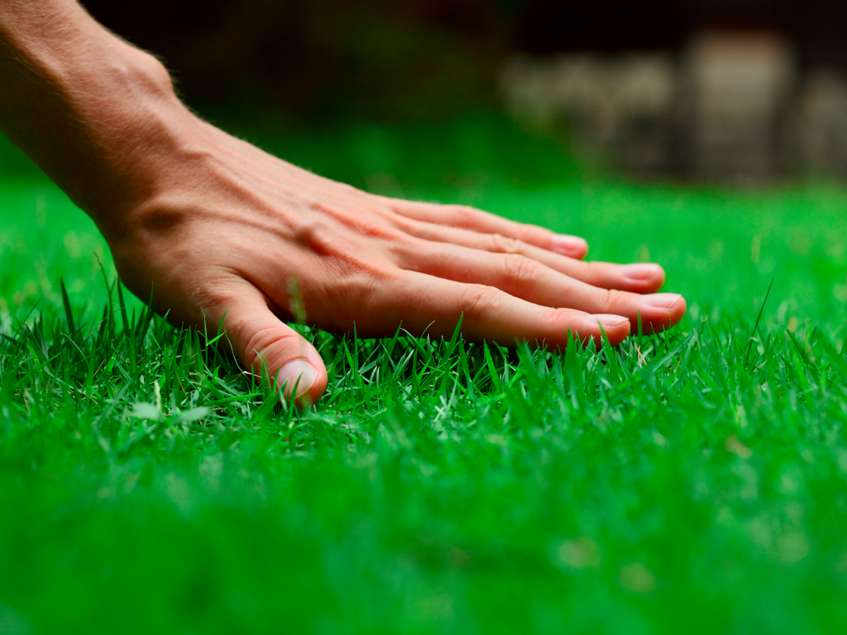 All Green Pest Control and Lawn Care of Utah