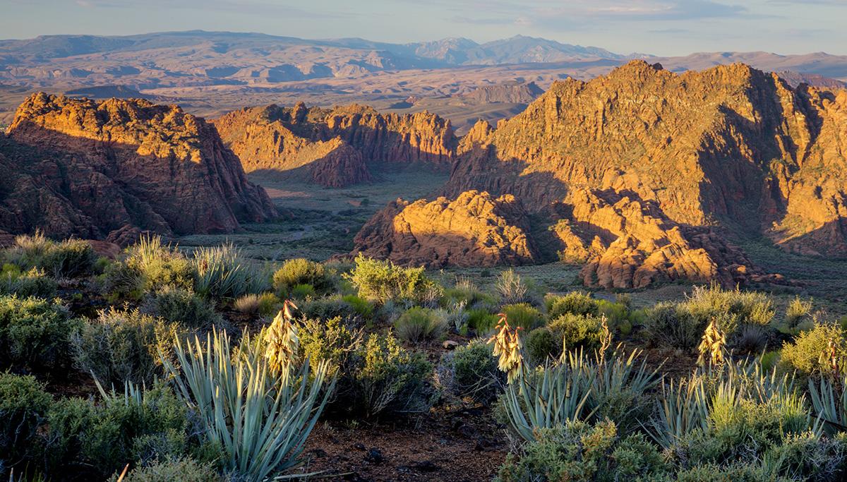 Desert Cove